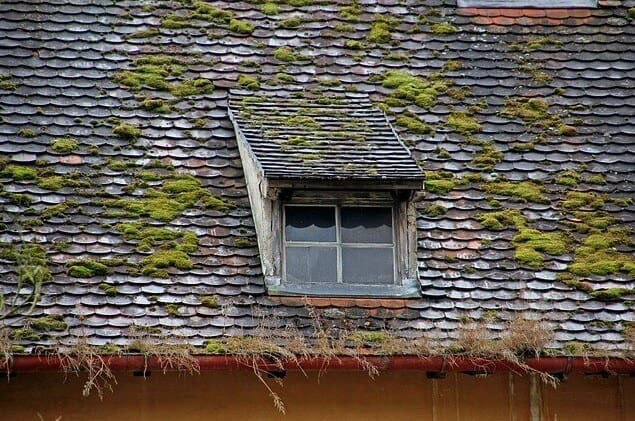 Remove Moss From Your Roof